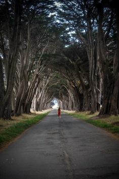 Point Reyes National Seashore. Chaque fois que je pars en voyage, je découvre des endroits comme celui-ci qui me rappelle à quel point la nature est magnifique. Les arbres se repliant parfaitement sur eux-mêmes, filtrant la lumière pour laisser place à une ambiance de film d'horreur.