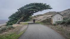 Point Reyes National Seashore (Lighthouse). Voilà ce qui arrive quand la brise d'un océan souffle sur un arbre durant sa croissance. Merci dame Nature pour cette œuvre d'art. La place la plus mystérieuse que j'ai eu la chance de voir dans ma vie.